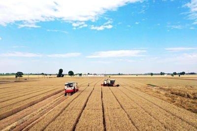 国家级制种大县丨2022年底嘉祥县域内大豆制种面积可达22万亩