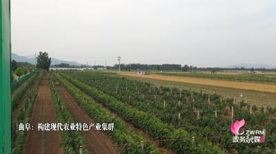 曲阜构建现代农业特色产业集群