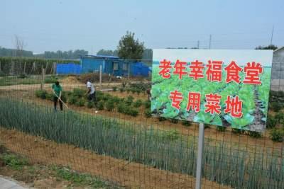 """闲置地变""""蔬菜宝盆"""" 成了""""幸福食堂菜篮子"""""""