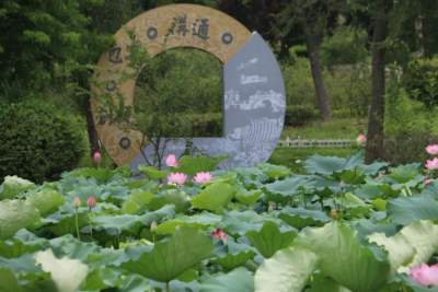 一池荷蓮嬌欲語 湖韻碧色盈新城 夏日的太白湖也太美了!