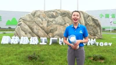 学习强国看济宁 | 邹城蘑菇小镇