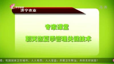 專家課堂:朝天椒夏季管理關鍵技術