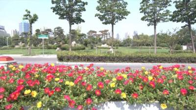 金鄉提升城市綠化品質 助力全國文明城市創建