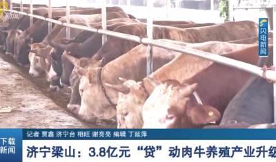 """鄉村振興丨梁山:3.8億元""""貸""""動肉牛養殖產業升級"""
