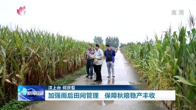 济宁加强雨后田间管理 保障秋粮稳产丰收