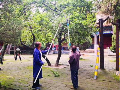 曲阜市文物局開展古樹保護專項整治行動