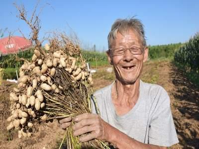 曲阜:山坡花生大豐產  農民增收迎笑臉