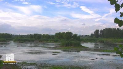 太美了!白鷺起舞泗河濕地公園