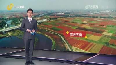 快看!鱼台辣椒丰收美景登上《山东新闻联播》