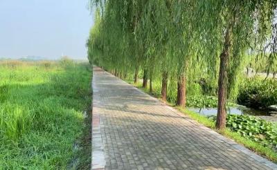 """黄河入海看山东 最先进的人工湿地技术 成就新濠天地官网的超级""""净水器"""""""