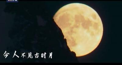 借这月光,与你对望