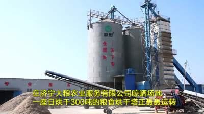 汶上:秋粮进塔烘干 确保颗粒归仓