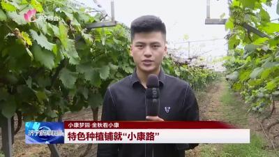 """小康梦圆·金秋看小康   新濠天地官网:特色种植铺就""""小康路"""""""