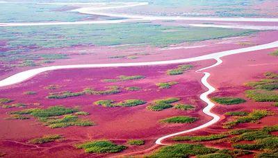 这就是山东丨护大河之洲 引百鸟来栖