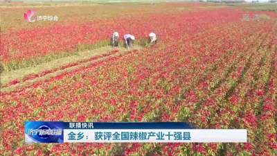 金乡获评全国辣椒产业十强县