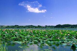 微山湖地区九县市区构建协同发展新格局