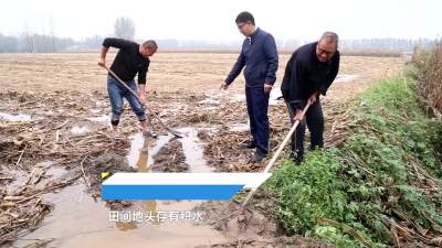 汶上农技人员走进田间地头 帮农户抢收抢种